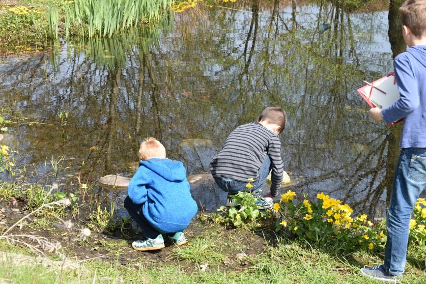 Kinder am Suchen und Forschen nach Kaulquappen